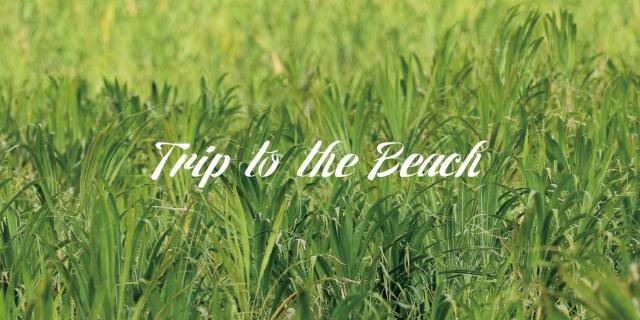 """» Canon EOS-5D Mark Ⅳ PV """"Trip to the Beach"""""""
